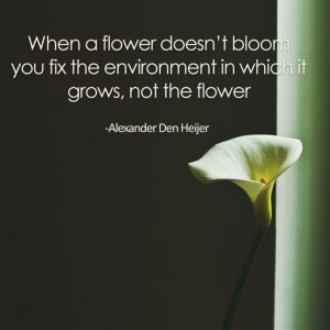 live life big by fixing your environment - when a flower doesn't bloom you fix the environment in which it grows, not the flower - Alexander Den Heijer